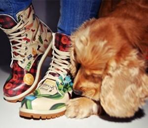 DOGO trendi ile tanışın!